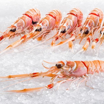 "Premium New Zealand Scampi -Size 2 (5-7pcs/ ""- 500g pack"")"