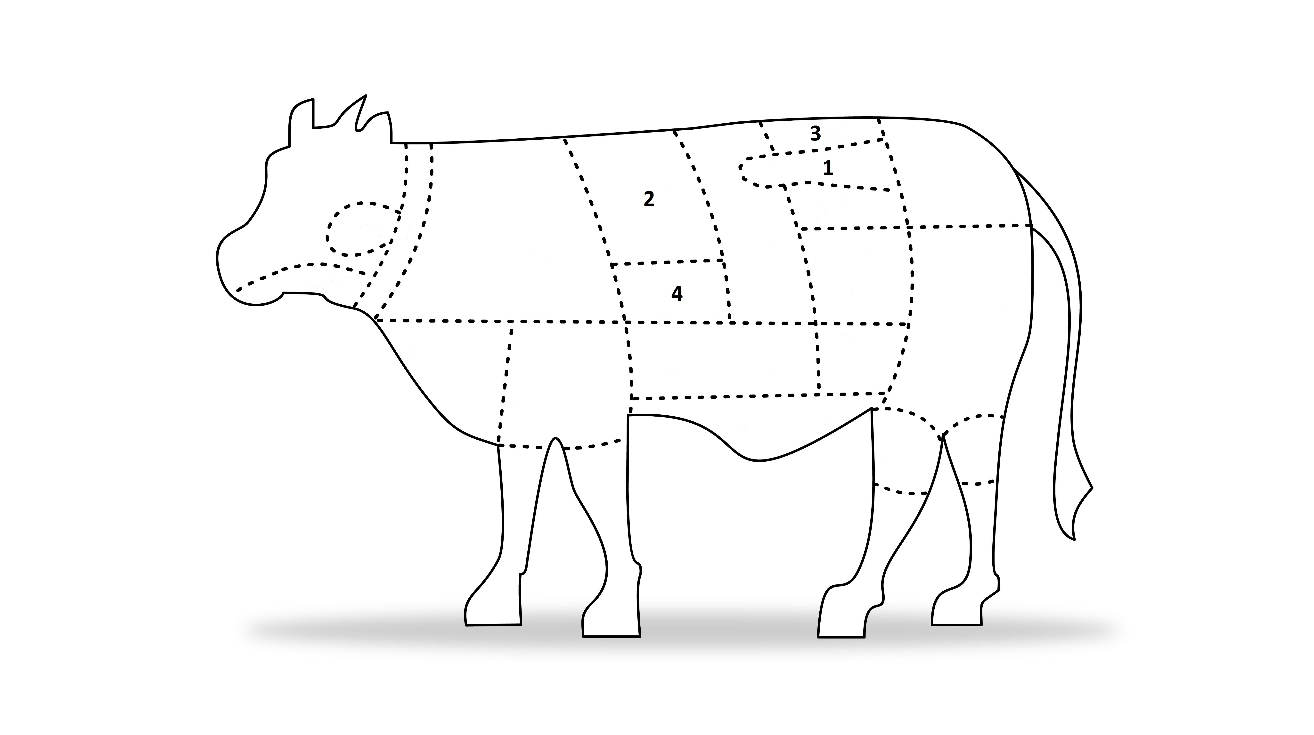 angus cows meat diagram